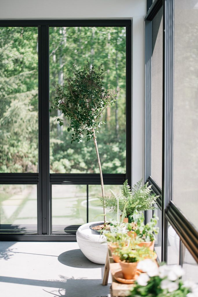 A potted tree sits in front of a large window