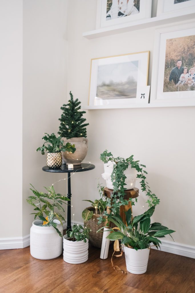 Indoor Houseplants decorated for Christmas