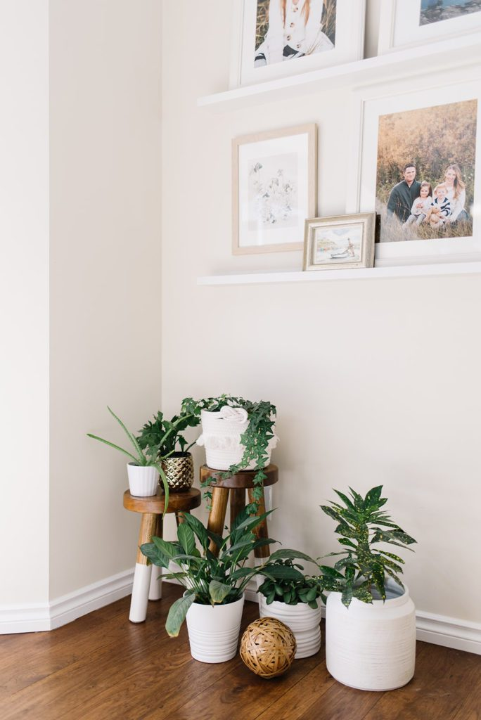 A collection of plants under a gallery wall