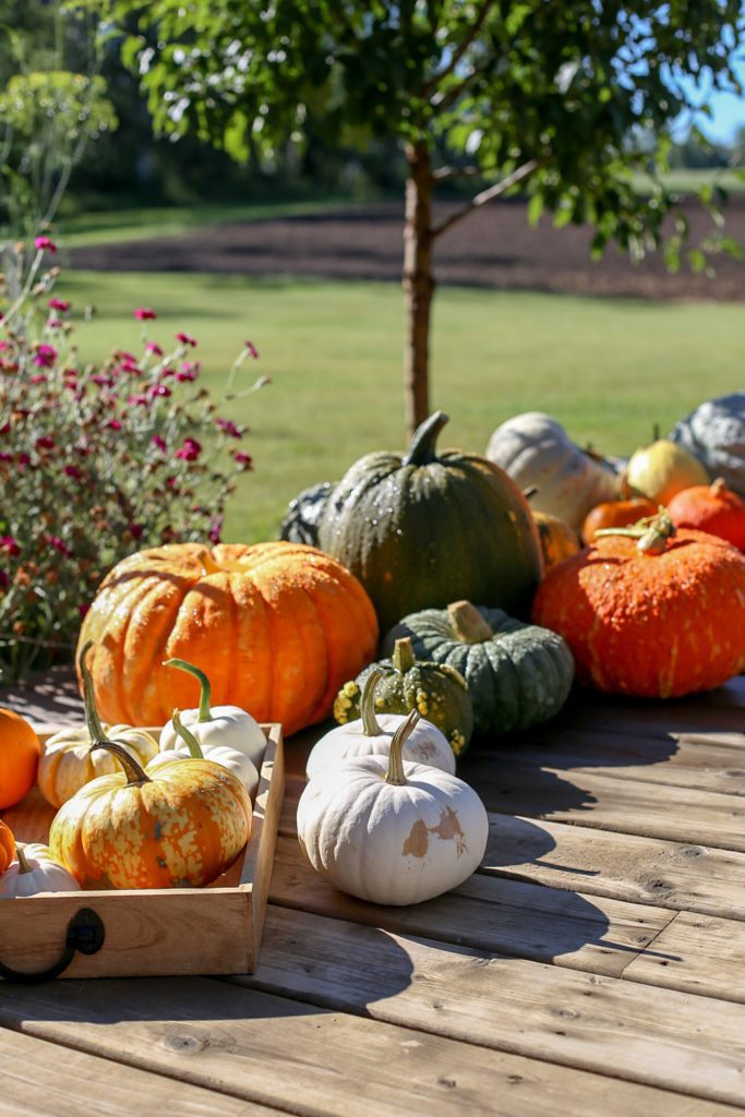 A group of pumpkins sitting on a deck