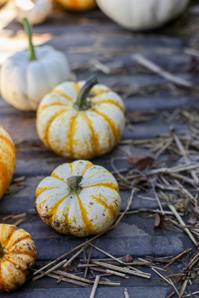 tiny white and yellow striped pumpkins