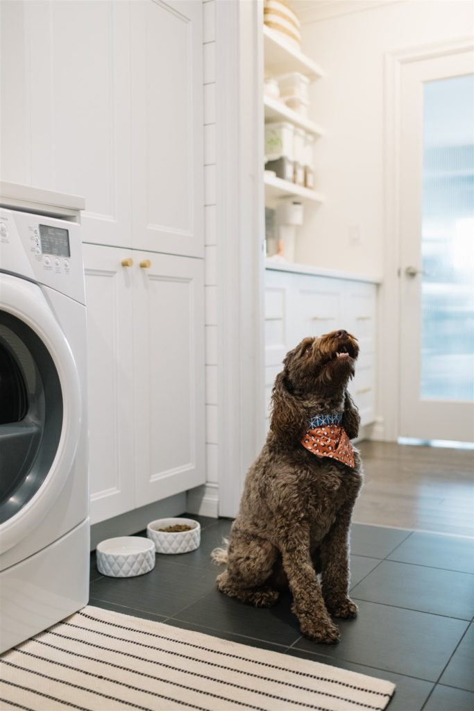 A dog sitting next to it\'s food bowls in a renovated mudroom