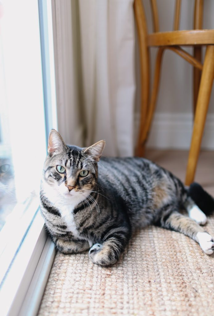 A cat resting on a rug by a window