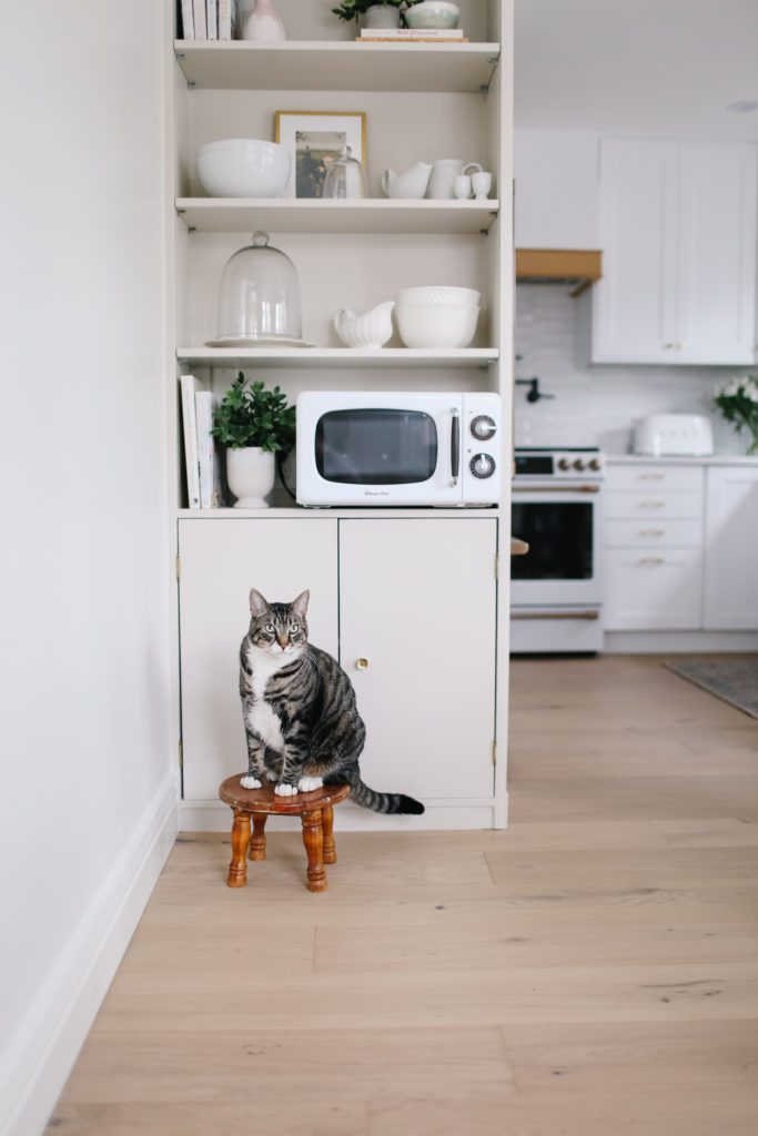 A cat sitting on top of wooden stool in front of kitchen shelves