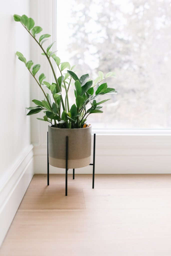 A potted plant in front of a window