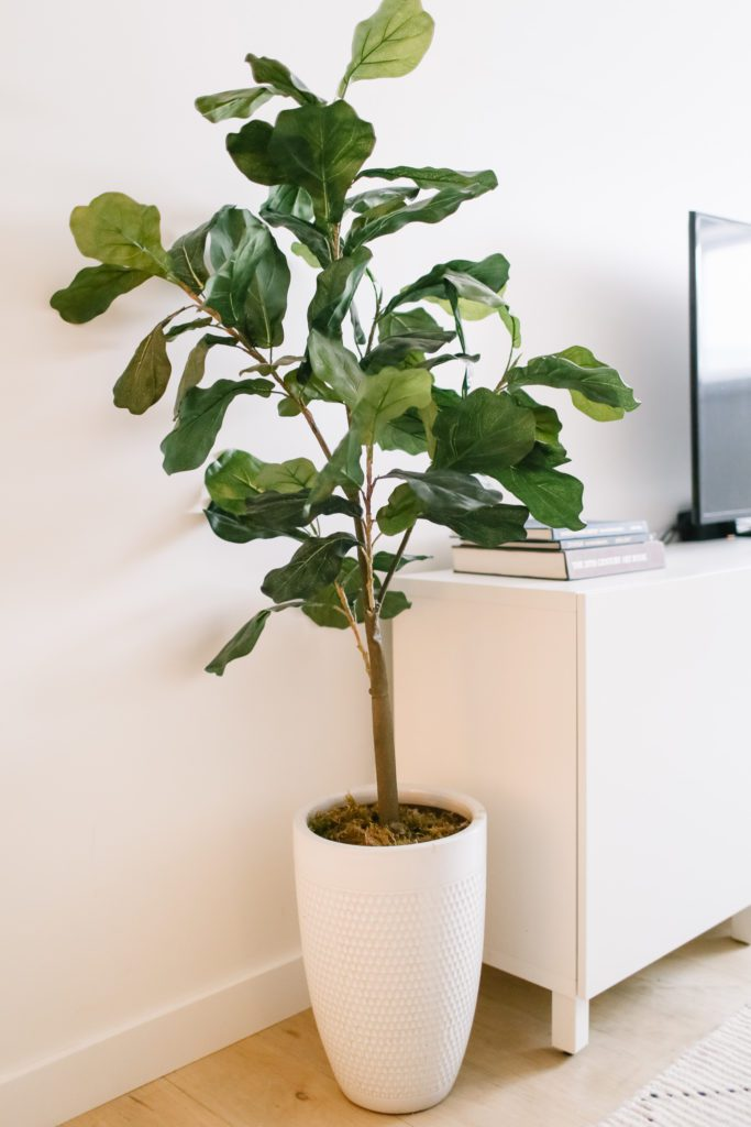 A large potted tree beside a TV stand
