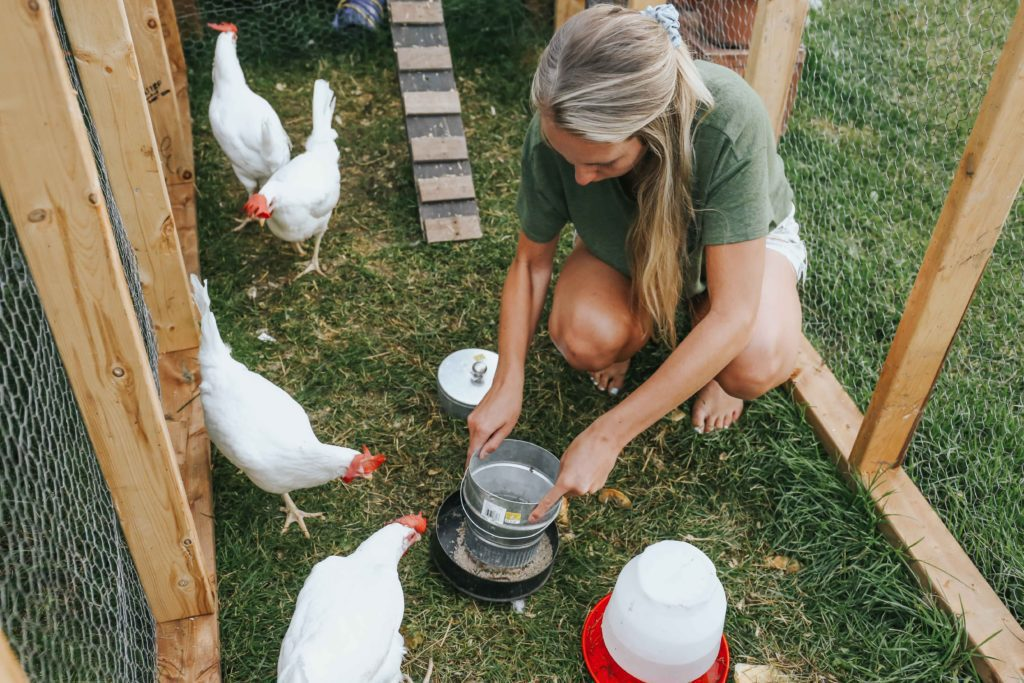 A woman practicing urban homesteading and feeding her chickens in their outdoor run