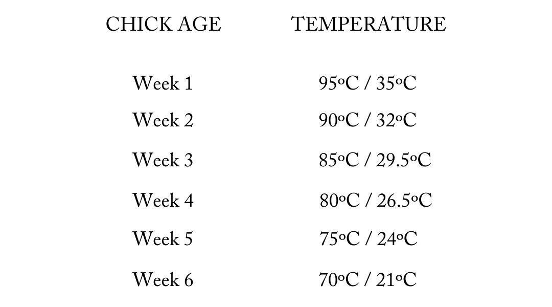 Chart showing appropriate temperatures for chicks